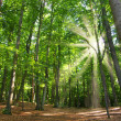 Beech wood — Stock Photo