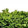 Close up of lettuce leaves — Stock Photo #12796012