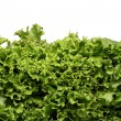 Close up of lettuce leaves - Stockfoto