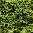 Close up of lettuce leaves - Foto Stock