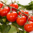 Cherry tomatoes on a branch with parsley - Stock fotografie