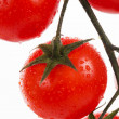 Fresh cherry tomatoes on a branch - Stock fotografie