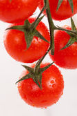 Fresh cherry tomatoes on a branch — Stockfoto