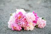 Bouquet of beautiful peonies on a road — Stock Photo