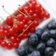 Lots of different berries — Stock Photo