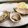 Oysters on a plate — Stock Photo