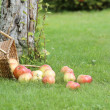 Apples on the grass — Stock Photo #31728271