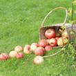 Apples on the grass — Stock Photo