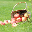 Apples on the grass — Stock Photo #31728287