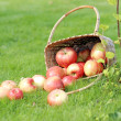 Apples on the grass — Stock Photo #31728299