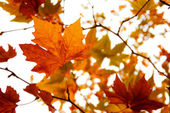 Autumnal reds leaves — Stock Photo