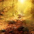Autumn forest filled rays of the sun — Stockfoto