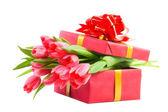 Tulipes dans une boîte cadeau — Photo