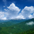 Green forest under a blue sky with clouds — Stock Photo