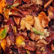 Colorful autumn leaves — Foto de Stock