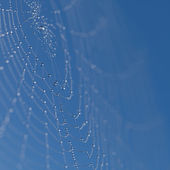 Web with dew drops — Stock Photo