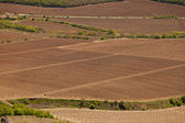 Fields with grapevine — Stock Photo