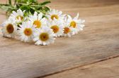 Fresh chamomile flowers — Stock Photo