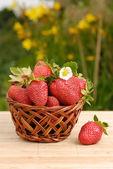 Strawberries in the basket — Zdjęcie stockowe