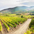 Vineyards — Stock Photo #13514554