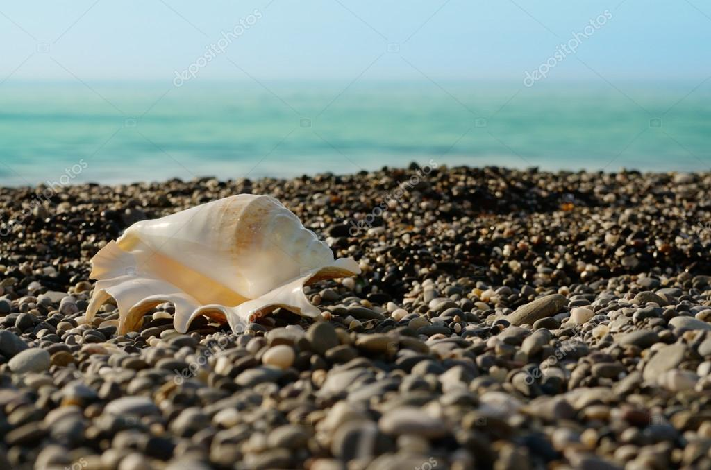 Shell on beach with tide at background  Stock Photo #13959619