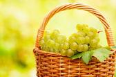 Do zbioru winogron — Zdjęcie stockowe