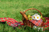 Picnic basket — Stock Photo