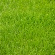 Bright green grass — Stock Photo #15778623