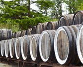 Oak port wine barrels stacked in a row — Photo