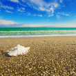 Shell on beach with tide at background — Stock Photo #17832125