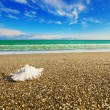 Shell on beach with tide at background — Stock Photo