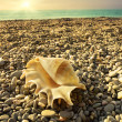 Shell on sea beach with tide at background — Stock Photo #18518909