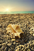 Shell on sea beach with tide at background — Stock Photo