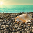 Shell on beach with tide at background — Stock Photo #18815441