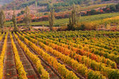 Sunset over a vineyard in the fall season Crimea Ukraine — Stock Photo