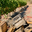 Crates for grape harvesting — Stock Photo