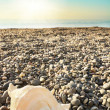 Shell on beach with tide at background — Stock Photo #22458987