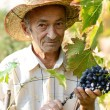 Senior vine-grower — Stock Photo