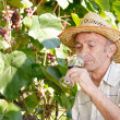 Senior viticulturist - Stock Photo