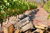 Crates for grape harvesting — Stock fotografie