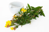 Mortar ans pestle with evening primrose — Stock Photo