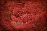 Roses vintage — Stock Photo