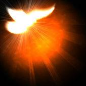 Pomba com raios em um escuro e de brilho — Foto Stock