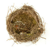 Empty nest of birds — Stock Photo