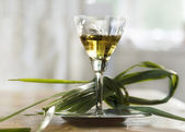 Buffalo grass vodka glass — Stock Photo
