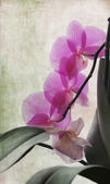 Textured pink orchid — Stock Photo