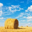 Hay bale on the field - Stock Photo