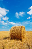 Hay bale on the field — Stock Photo