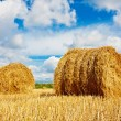 Hay bales on the field - ストック写真