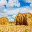 Hay bales on the field - Foto de Stock